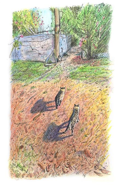 Kitan and Tyger walking towards Mama in the Kitty Cat Forest